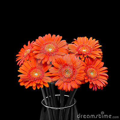 Free Orange Gerbera Flower In Vase On Black Background Stock Image - 18429001