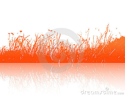 Orange grass reflection. Vector
