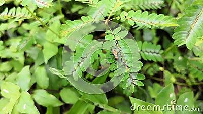 Orange Insekt auf der Niederlassung einer Anlage stock video footage