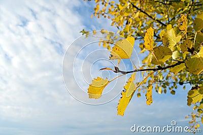 Orange leaf with sky
