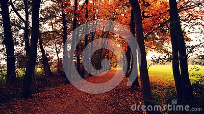 Orange Leaves Covered Pathway Between Trees During Daytime Free Public Domain Cc0 Image