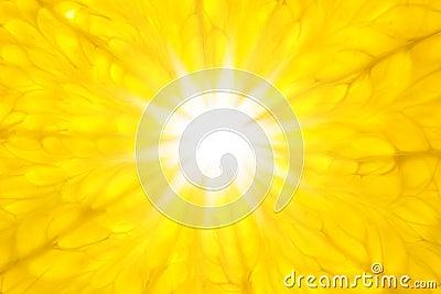 Orange like Sun / Super Macro / background