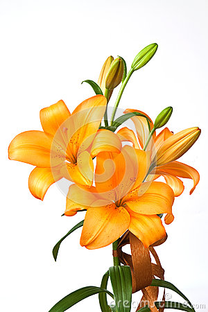 Free Orange Lilies Stock Images - 40225834