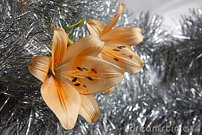 Orange lily on silver decorate
