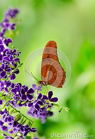 Free Orange Longwing (Dryas Iulia) Butterfly Royalty Free Stock Photo - 27345805