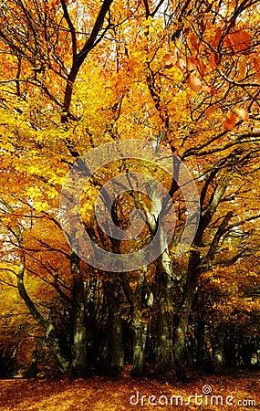 Orange magic tree