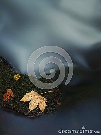 Orange maple leaf on mossy stone below increased water level.