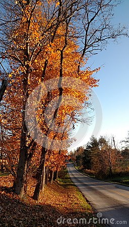 Free Orange Maple Trees Along A Quiet Country Road On A Beautiful Autumn Day Stock Photos - 82955653