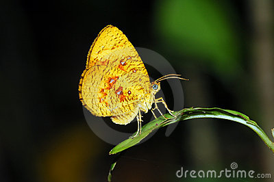 Orange moth butterfly