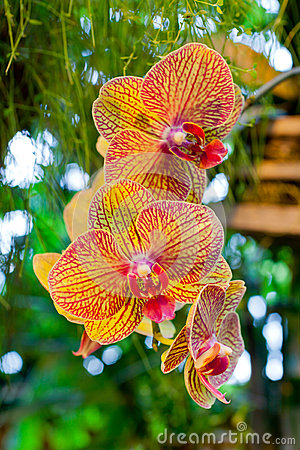 Orange Orchid Flowers on Leaves Background