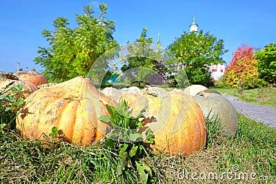 Orange pumpkin on the grass
