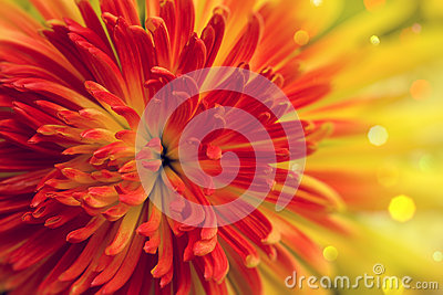 Orange-red flower
