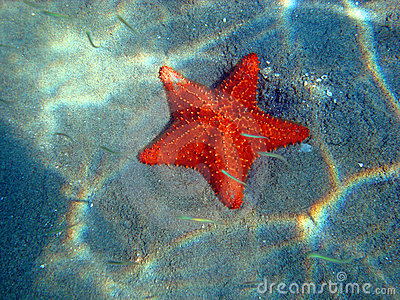 Orange-red starfish at the bottom of the sea