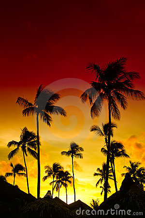 Orange and red sunset over sea beach with palms