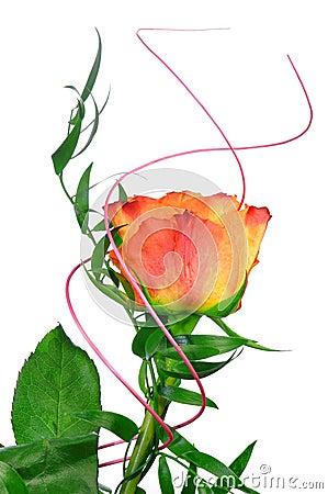 Free Orange Rose Royalty Free Stock Photography - 23073227
