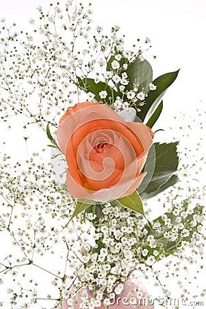 Free Orange Rose With Baby S Breath Royalty Free Stock Photo - 7226685