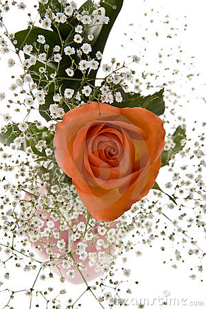 Free Orange Rose With Baby S Breath Stock Images - 7539864