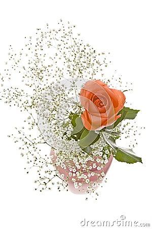 Free Orange Rose With Baby S Breath Stock Photos - 8132163