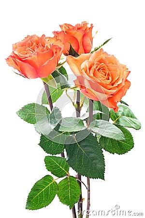 orange rosen stockfotografie bild 35041512. Black Bedroom Furniture Sets. Home Design Ideas