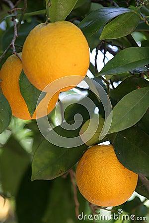 Orange s