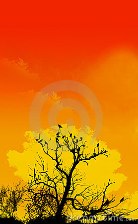 Orange Sky And Tree Foreground