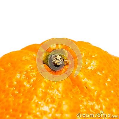 Orange Stalk