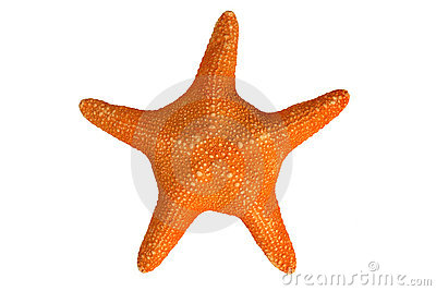 An orange starfish