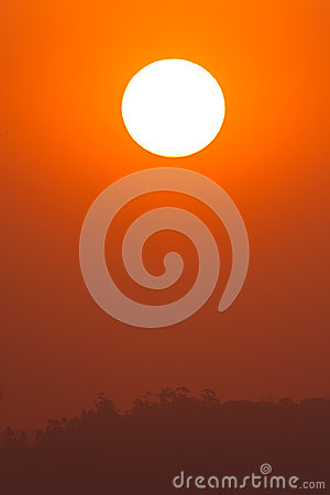 Orange Sun Trees