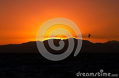 Orange sunrise with bird