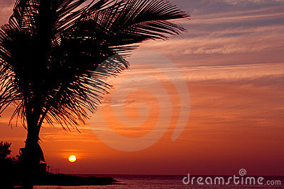 Orange sunset with palm