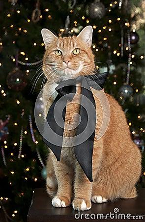 Free Orange Tabby Cat Stock Photo - 17462080