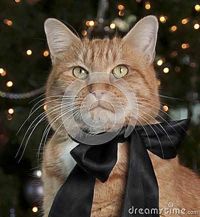 Free Orange Tabby Cat Royalty Free Stock Image - 17470626