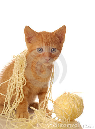 Orange tabby kitten with yarn