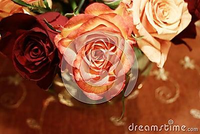 Orange thai roses 021