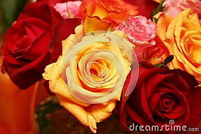Orange thai roses 025