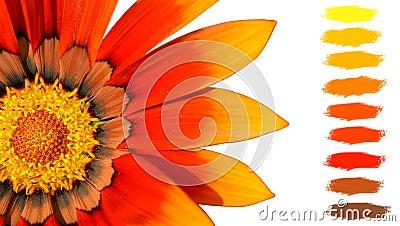 Orange treasure flower color palette