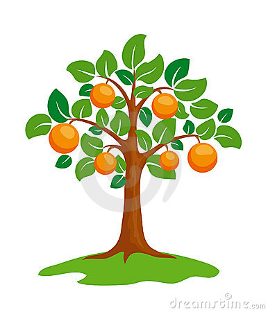 Free Orange-tree Royalty Free Stock Images - 13871839