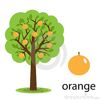 Free Orange Tree Stock Images - 14894404