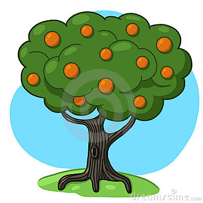 Orange tree illustration