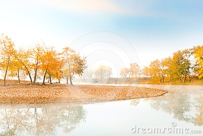 Orange trees near tranquil river at morning