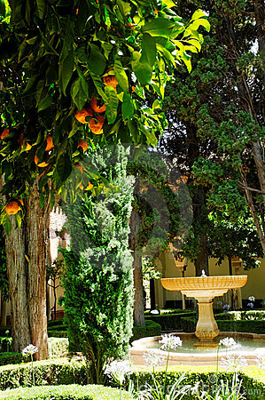 Orange trees in patio