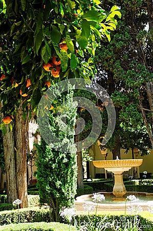 Orange trees in patio