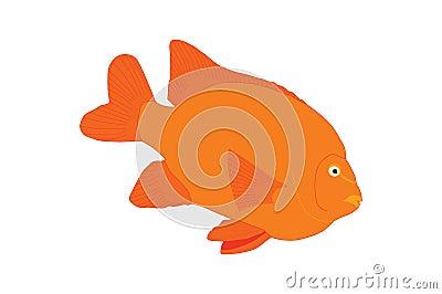 Orange Tropical Fish