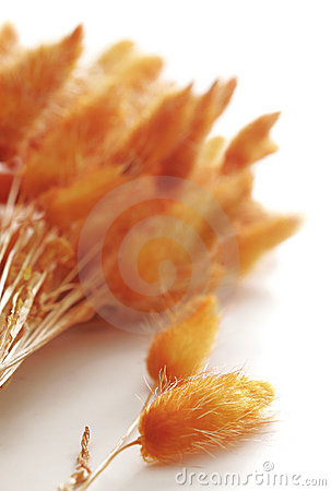 Orange Tufts