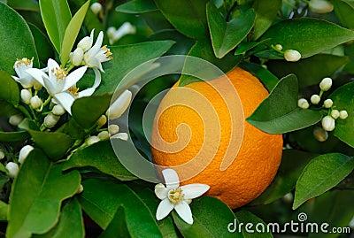 Orange und orange Blüte