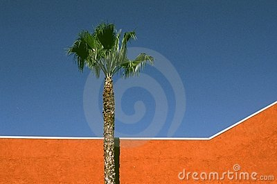 Orange Wall and Palm