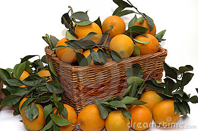 Oranges in the basket
