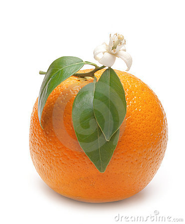 Oranges with leafs and blossom