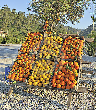 Oranges and lemons for sale