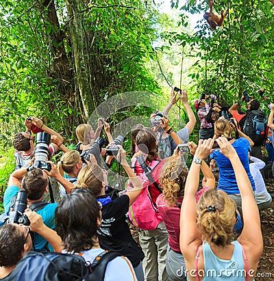 Free Orangutan Madness Royalty Free Stock Photography - 85358487